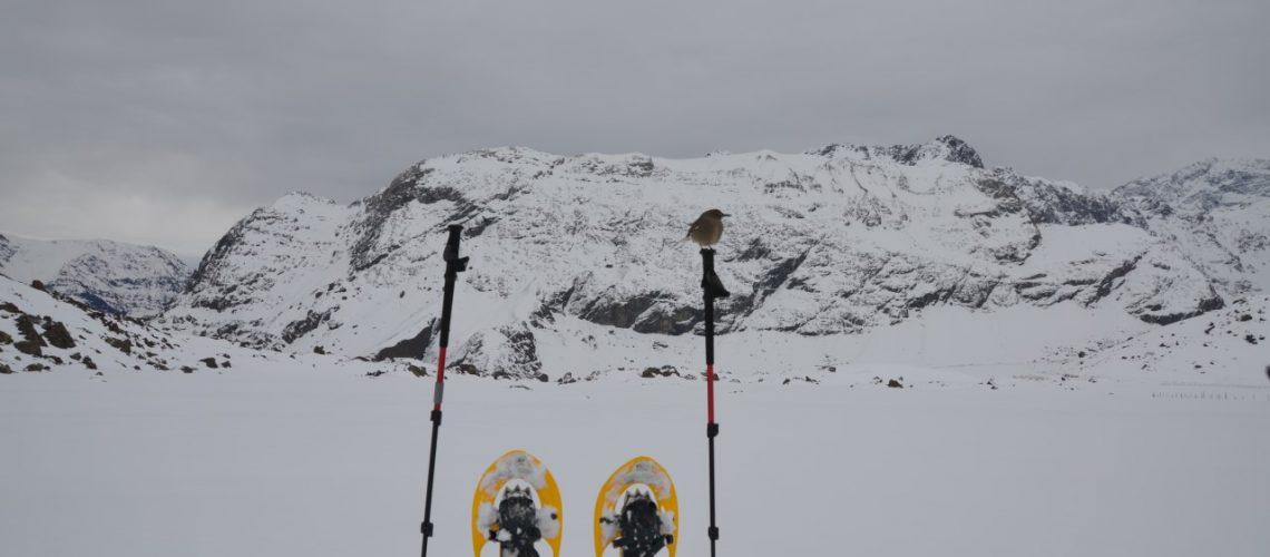 trekking nieve pillqu